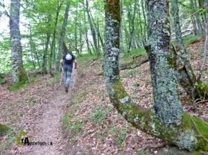 bosques en Picos de Europa.