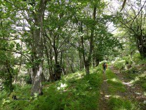 Bosque hacia el valle del río Del Oro