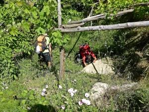 Fuente del fresno en el valle del Taibilla