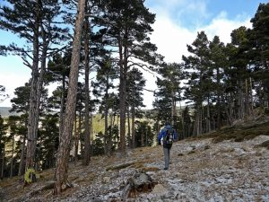 bosque en Mora de Rubielos