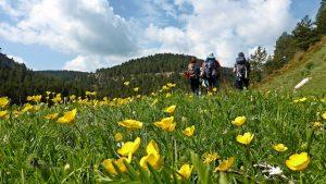 Primavera en la sierra de Gudar