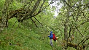 Bosques del valle de Laciana