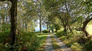 Bosque en el Camino Natural en Asturias